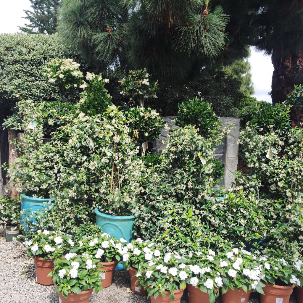 Beautiful plants at every corner.