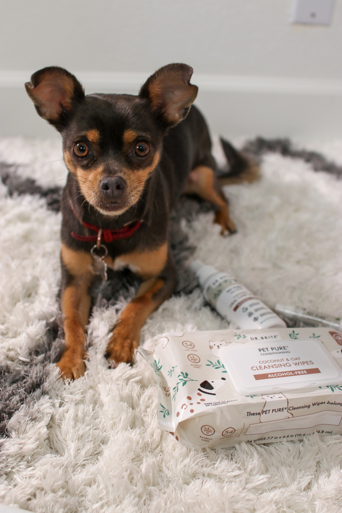 Dr. Brite Pet Care Products | Products made with love for your furry friend