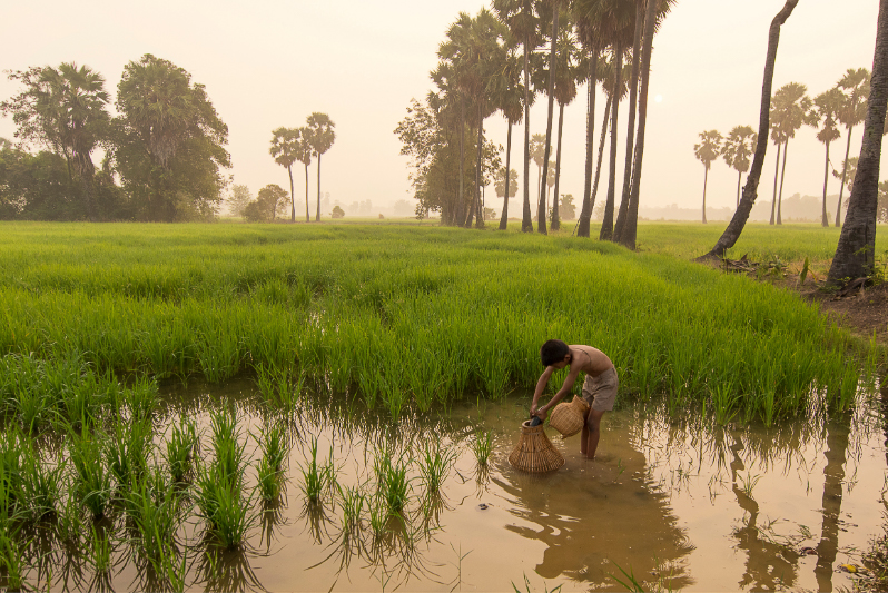 boy asian farmer people on rice green field during morning time